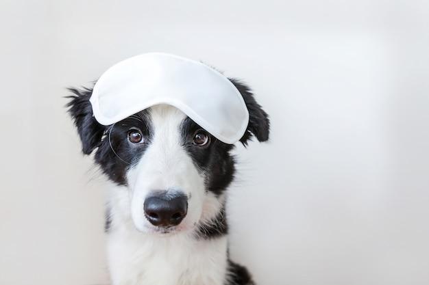 Non disturbarmi, lasciami dormire. border collie sorridente sveglio divertente del cucciolo di cane con la maschera di occhio di sonno isolata su fondo bianco. riposo, buona notte, siesta, insonnia, relax, stanchezza, concetto di viaggio.