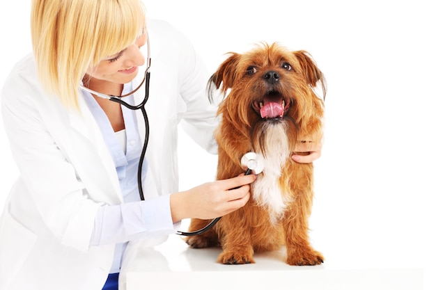 Medico che esamina un cane su sfondo bianco