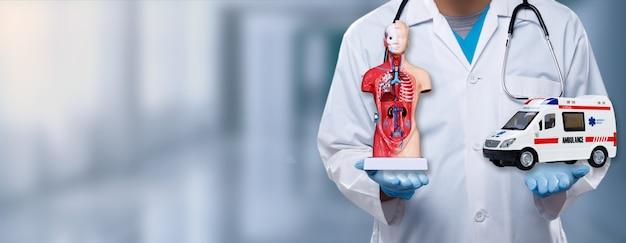 Il medico apre due mani e mostra il veicolo dell'ambulanza e la figura interna di anatomia sul segno del palmo con l'ospedale