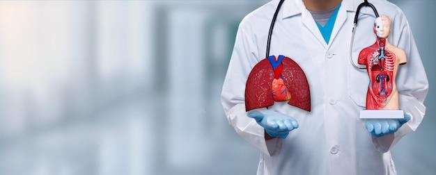 Il medico apre due mani e mostra la figura interna di polmoni e anatomia sul segno del palmo con l'ospedale