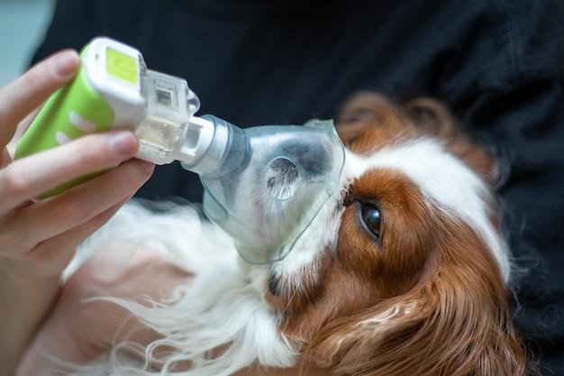 Il medico salva il cane con una maschera per l'ossigeno, malattie degli animali, inalazione con un nebulizzatore. foto del primo piano
