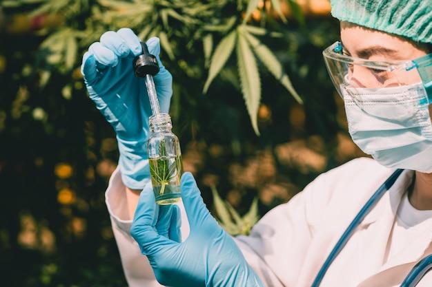 Doctor science con estratto di olio di cannabis sativa essenziale dalle foglie di marijuana per piante naturali a base di erbe.