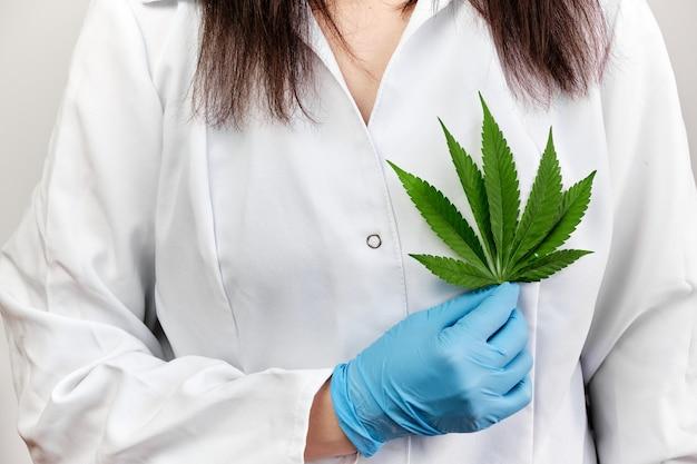 Medico o scienziato che tiene una foglia di cannabis vicino al cuore. legalizzazione delle piante di marijuana in medicina.