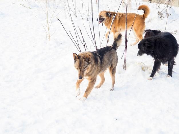 Cane nel canile, cane senza tetto nella gabbia