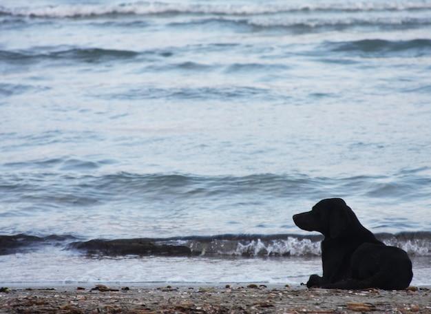 Cane sulla spiaggia Foto Premium