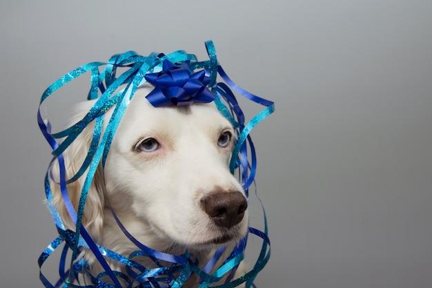 Cane festa di compleanno presente ricoperto di serpentina blu