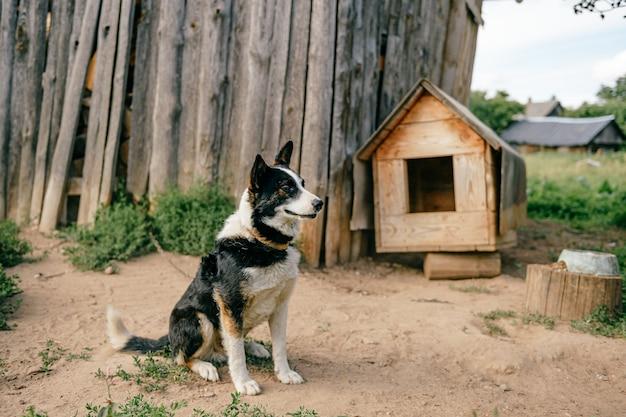 Cabina per cani in campagna