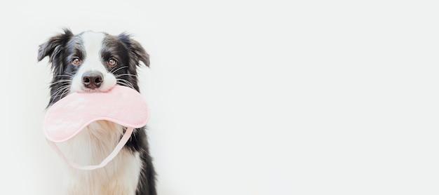 Cane border collie con dormire maschera per gli occhi isolati su sfondo bianco