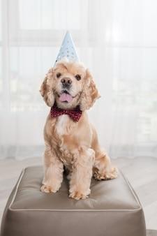 Cane con papillon e cappello da festa