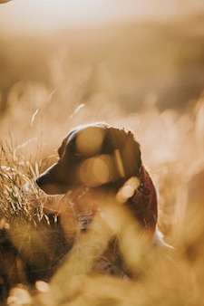 Cane in un campo di erba marrone