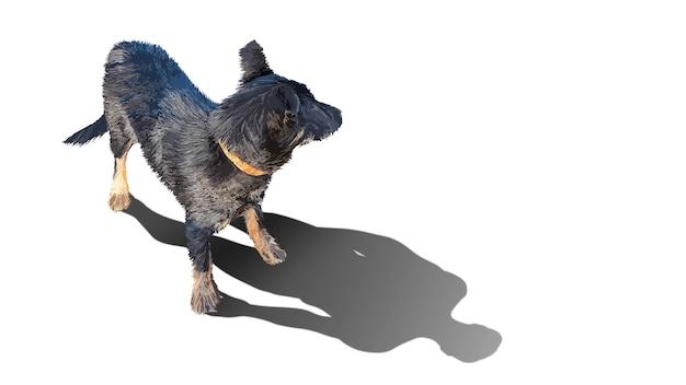 Il cane proietta l'ombra di un uomo. protezione degli animali. cane senza casa. concetto per la pubblicità sociale. sfondo isolato. copia spazio.