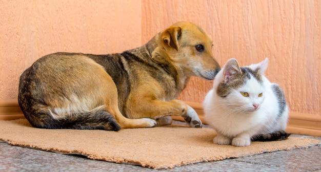 Il cane e il gatto sono sdraiati insieme sul tappeto. cane e gatto sono amici