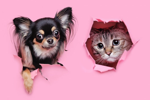 Cane e gatto che guardano attraverso i buchi in uno sfondo di carta