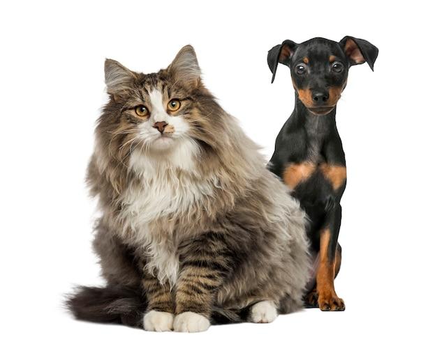 Cane e gatto seduto isolato su bianco