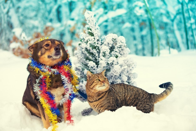 Un cane e un gatto seduti insieme all'aperto in una foresta innevata vicino a un albero di natale