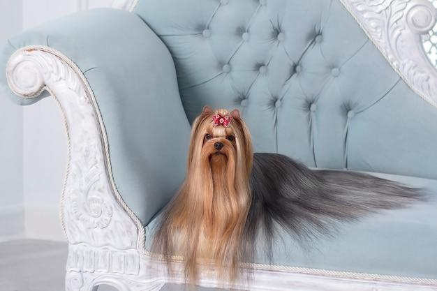 Il cane sulla sedia