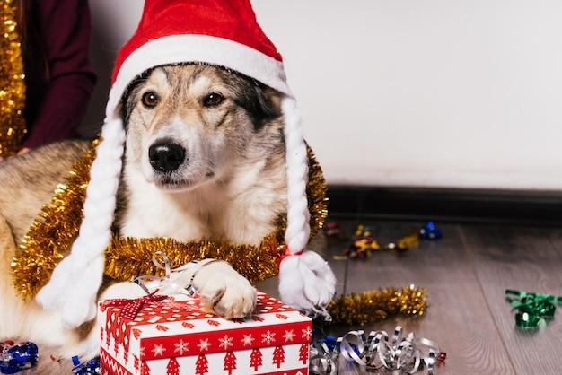 Cane con un cappello di natale su uno sfondo di regali