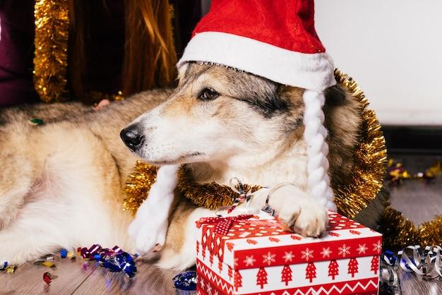 Cane con un cappello di natale in posa su uno sfondo di regali