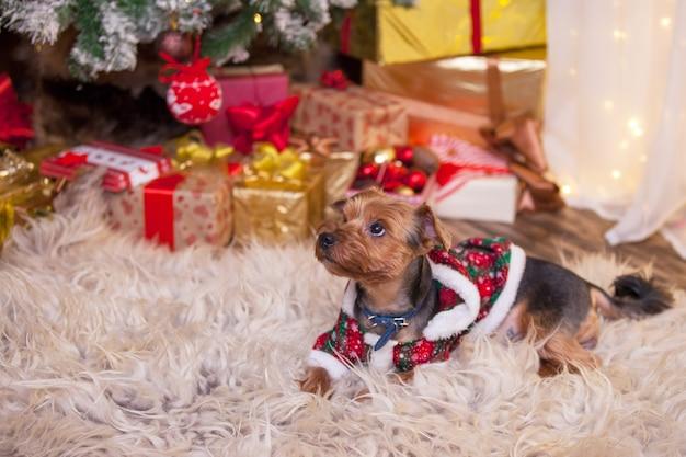 Cane sotto l'albero di natale