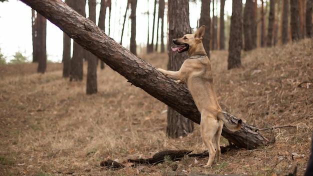 Il cane si è arrampicato su un albero per un bastone.