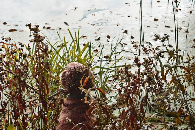 Il cane cocker spaniel si siede nell'erba