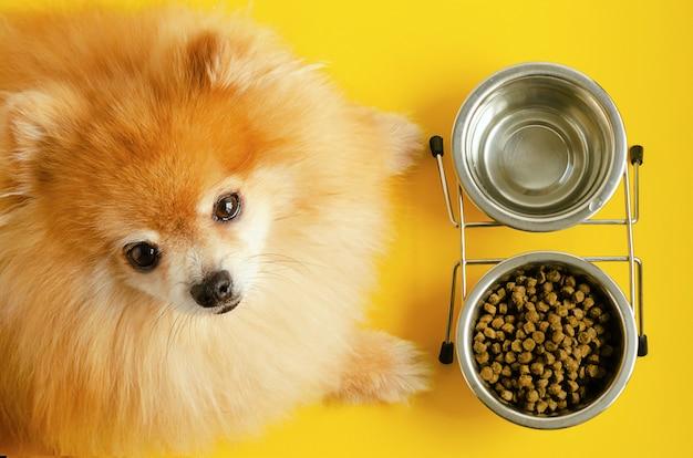Cane che mangia cibo secco e acqua nella ciotola, guardando la telecamera, in attesa di comando. animale e dieta.