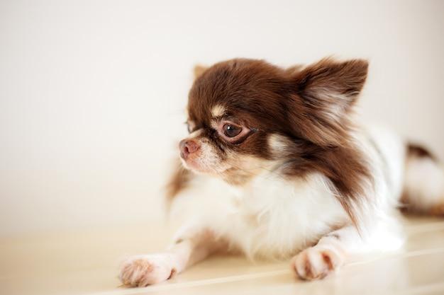 Cane sul pavimento nel negozio di animali con sfocatura.