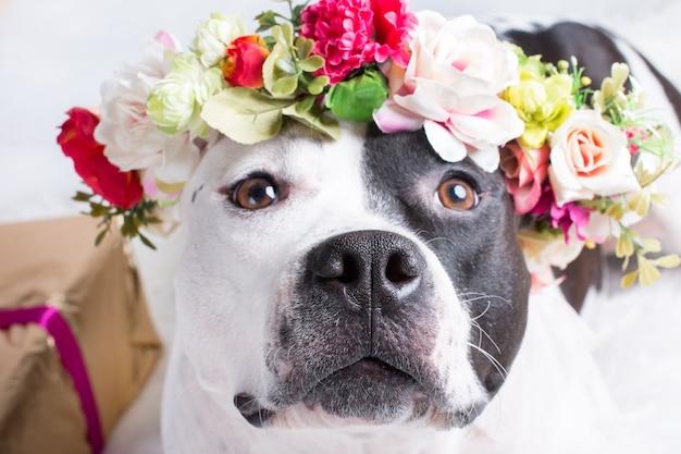 Un cane in una corona di fiori