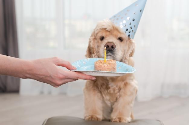 Cibo per cani con candela per il compleanno dell'animale domestico
