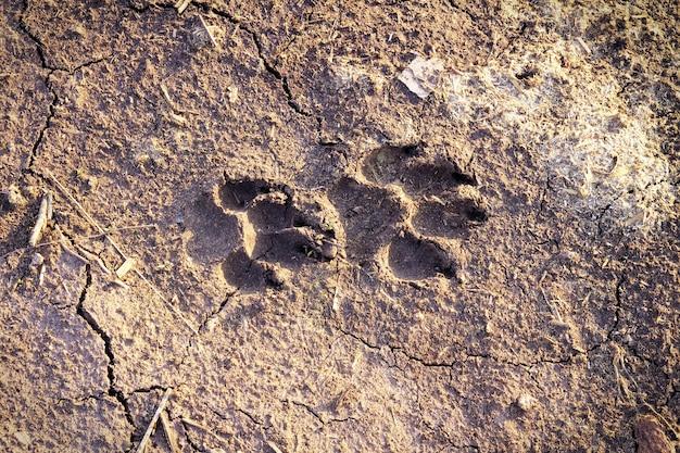 Impronta di cane su terreno secco e screpolato