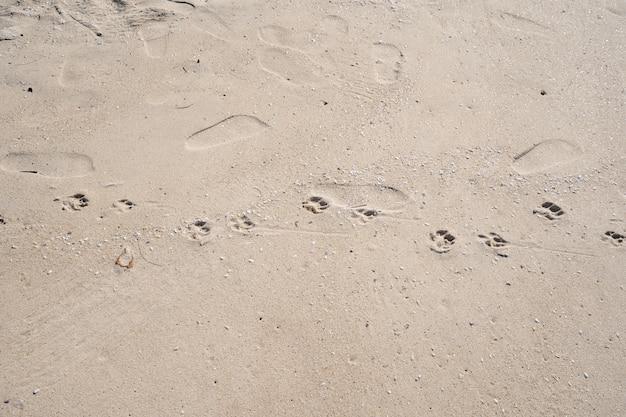 Impronte di cane sulla spiaggia tropicale di sabbia nella soleggiata giornata estiva.