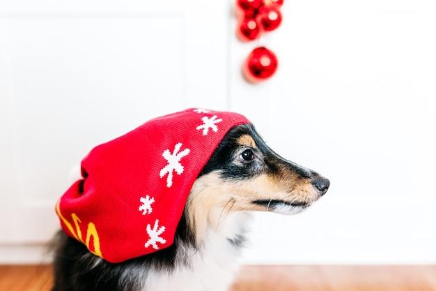 Cane con un cappello per il nuovo anno e natale, decorazioni per la casa per le vacanze, cucciolo