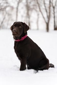 Cane che si diverte sulla neve con la famiglia
