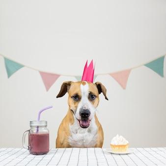 Il cane e il suo regalo di compleanno sotto forma di una torta festiva e una bevanda. cucciolo sveglio in una corona in posa nella stanza decorata con un muffin