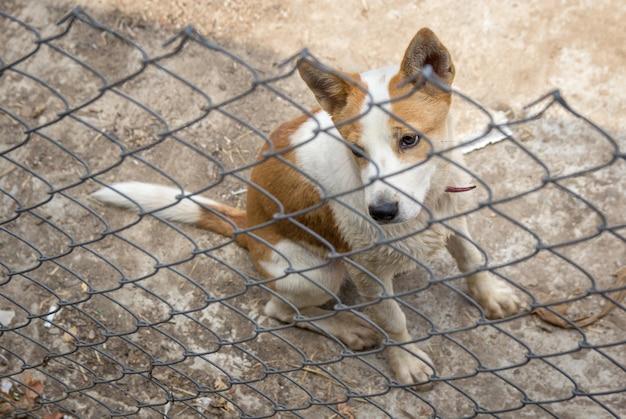Cane dietro il recinto di ferro