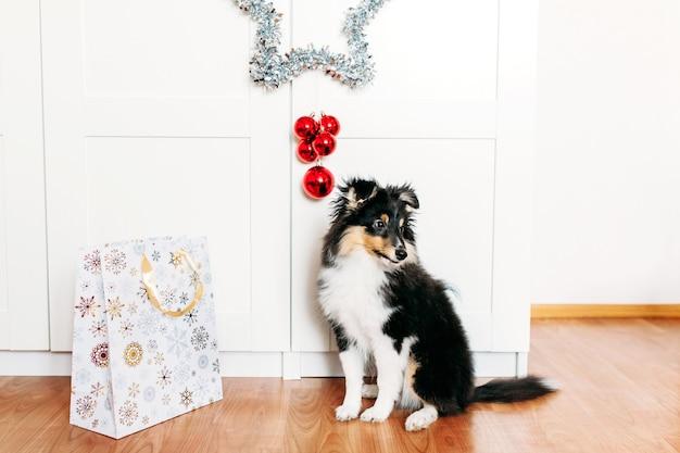 Il cane è seduto nella stanza, una stella per il nuovo anno e il natale, decorazioni per la casa per le vacanze, un cucciolo e una borsa regalo