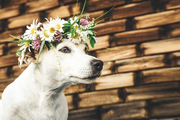 Cane jack russel in una corona di fiori