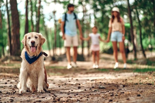 Il labrador del cane si siede nel parco sullo sfondo mamma papà con la figlia. famiglia felice nel fine settimana. campeggio, viaggi, escursioni.
