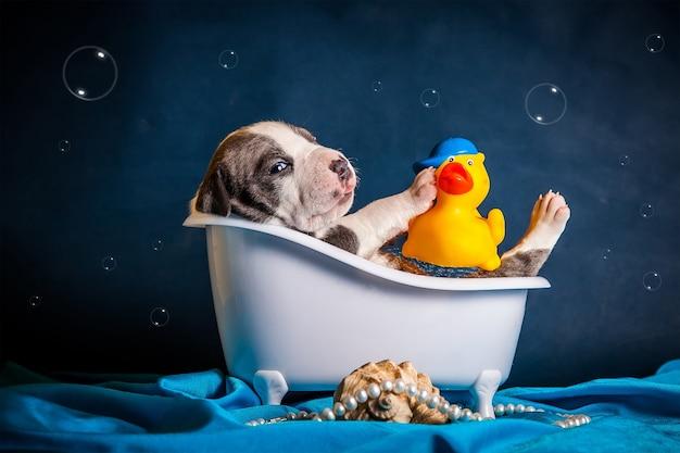 Il cane si trova nella vasca da bagno con le bolle. foto di alta qualità