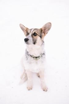 Il cane ascolta molto attentamente il suo padrone con piena devozione e comprensione