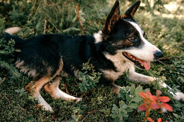 Cane che giace nella foresta