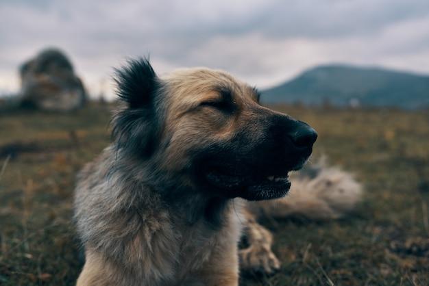 Il cane all'aperto in montagna si trova nel viaggio di amicizia del resto dell'erba