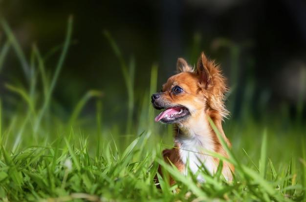 Cane nel parco