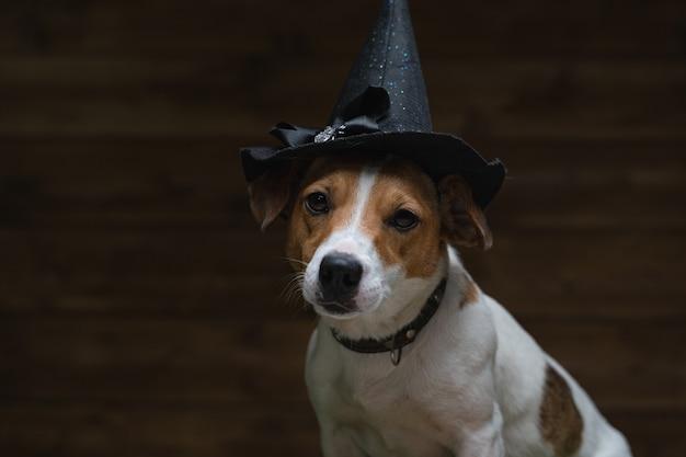Cane jack russell terrier vestito in costume per il festival del demone spaventoso halloween autunno ottobre