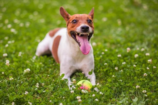 Cane che gioca con una palla sull'erba nel parco