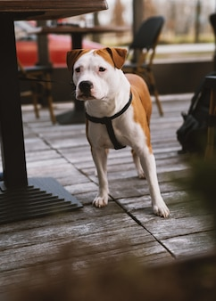 Ritratto di cane.