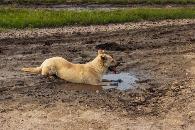 Cane nella pozzanghera