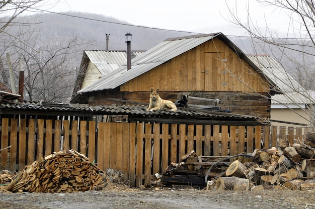 Cane in appoggio su un tetto di un granaio