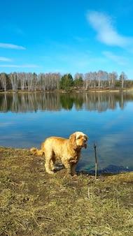 Il cane si riposa sul lago