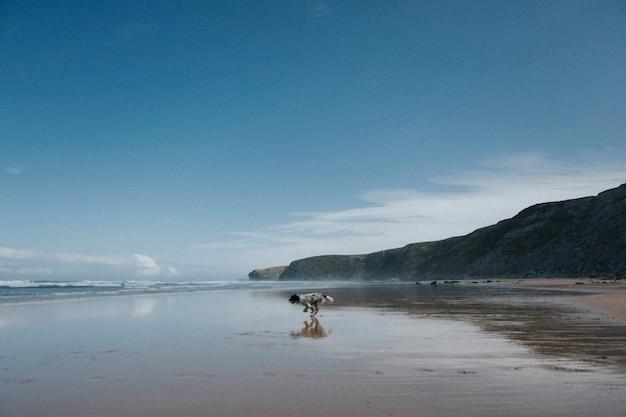 Cane che corre sulla spiaggia